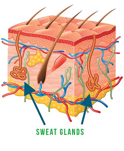 sweat glands hyperhidrosis